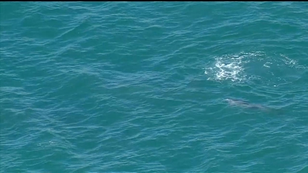 [DGO] RAW: Two Whales and Dolphins Swim Along San Diego Coast