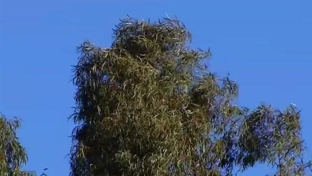 San Diego Under High Wind Warning
