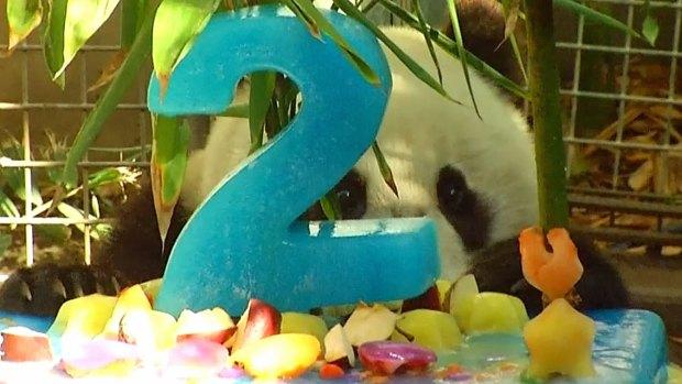 Images: San Diego Zoo's Panda Cub Xiao Liwu