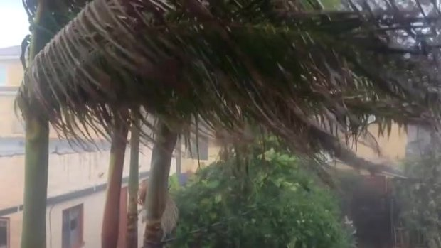 VIDEO: Freak Storm Hits North Park