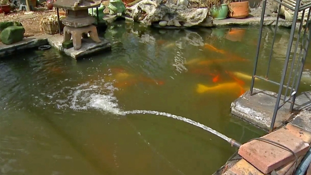 [DGO]Miracle Koi Fish to be Relocated