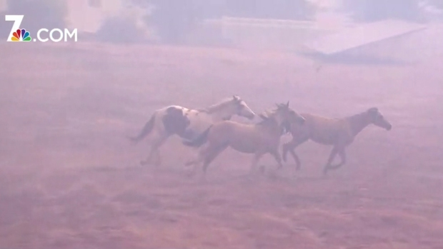 Horses Run Through Smoky Field While Homes Burn
