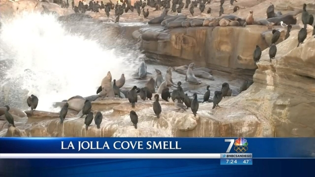 [DGO] What to Do About Smelly La Jolla Cove