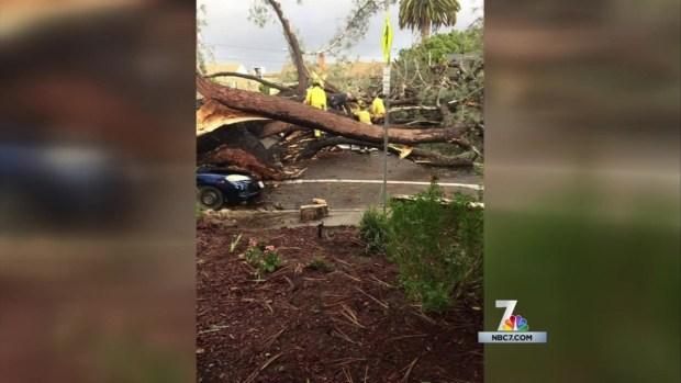 [DGO] Tree Falls on Car, Kills Driver