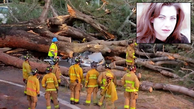Images: Giant Tree Crushes Woman on Pacific Beach Street