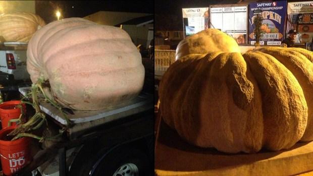 [BAY] Heavyweight Pumpkins Compete in Half Moon Bay Weigh-Off
