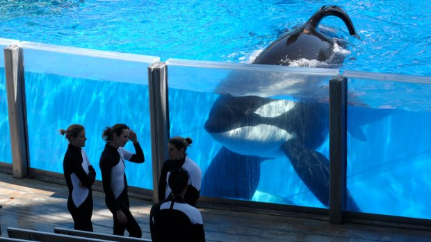 [DGO] SeaWorld Pays Tribute to Fallen Orca Highlighted in 'Blackfish' Documentary