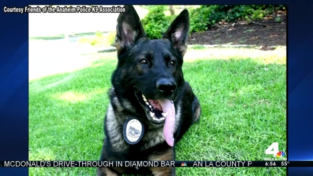 [LA] Friday Morning Update: Police Dog Recovering After Surgery