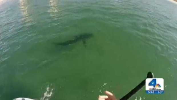 [LA] Caught on Camera: SoCal Surfer Spots 10-Foot Shark