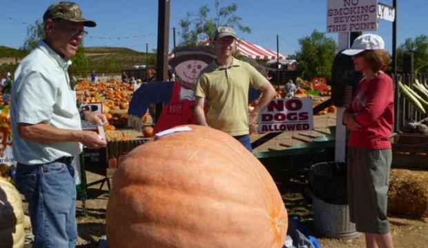 980-Pound Pumpkin