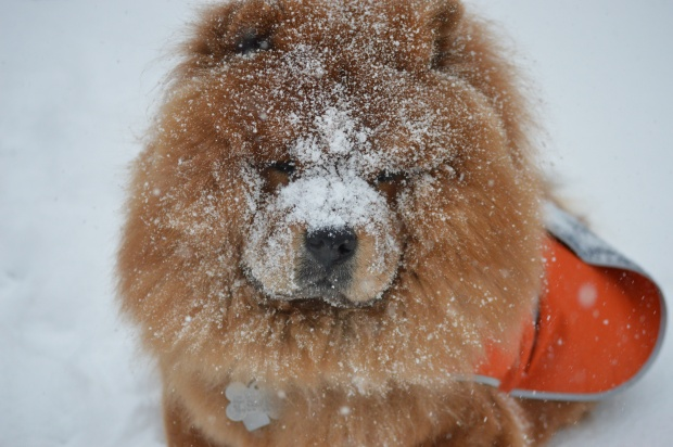 Your Photos: Adorable Dogs Play in the Snow