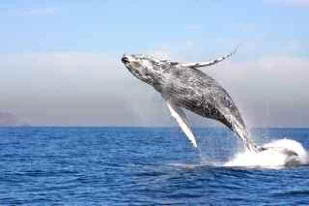 Images: Rare Whale Sightings