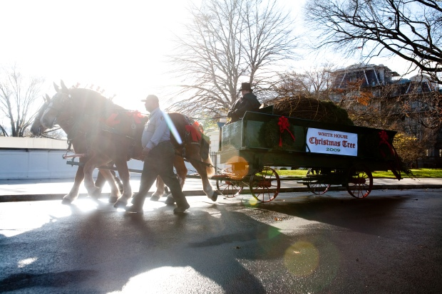 First Lady Receives White House Christmas Tree