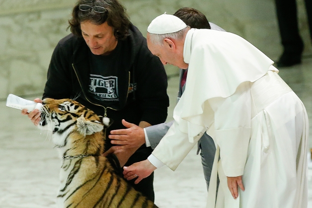 [NATL-DFW] Pope Francis Pets Tiger Cub During Circus Visit to Vatican