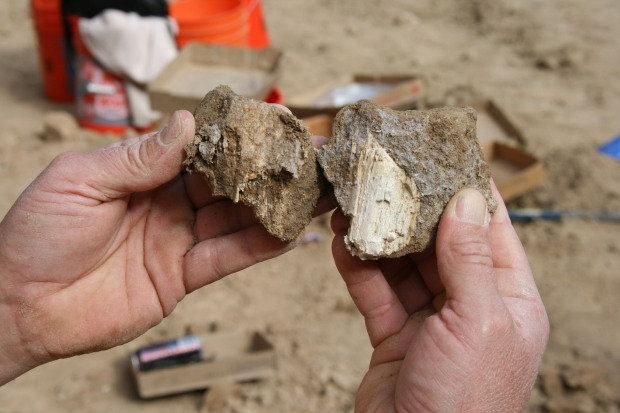 Images: Giant Sloth, Mammoth and Whale Uncovered