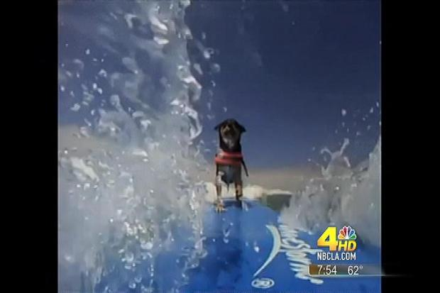 [LA] Rescue Dog: From Shelter to Surf