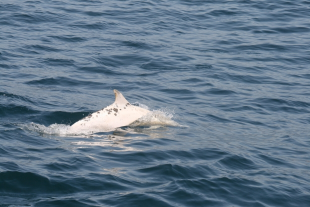 Caught on Camera: Albino Dolphin 2,200-Pound Sunfish