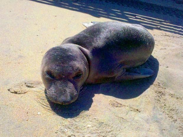 Border Agents Rescue Marine Mammals