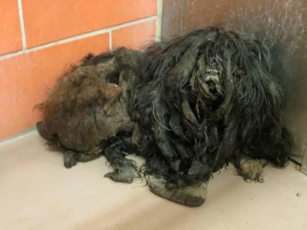 Shelter Dog's Amazing Transformation