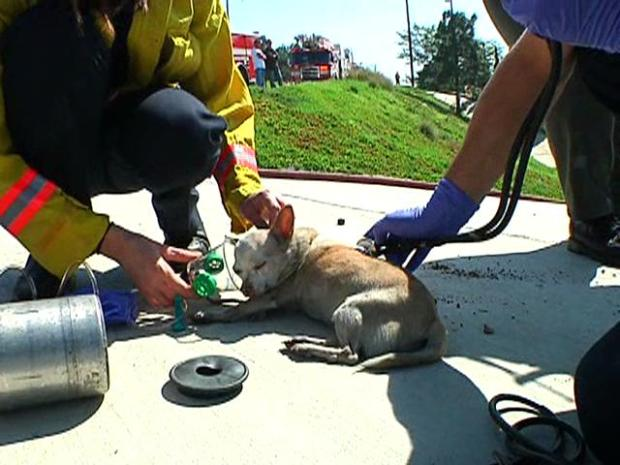 Images: Firefighters Save Dog