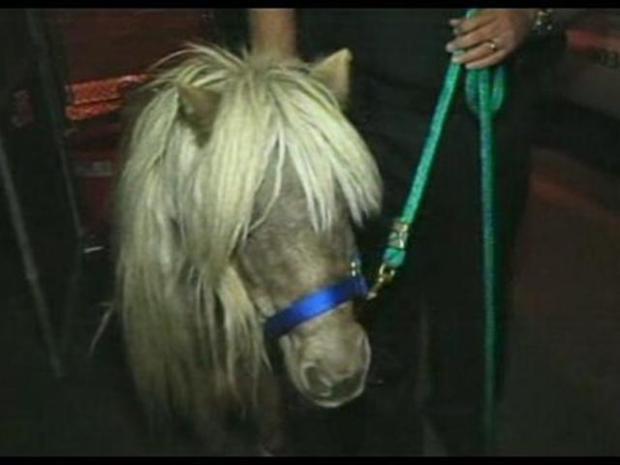 [LA] The Gift Horse