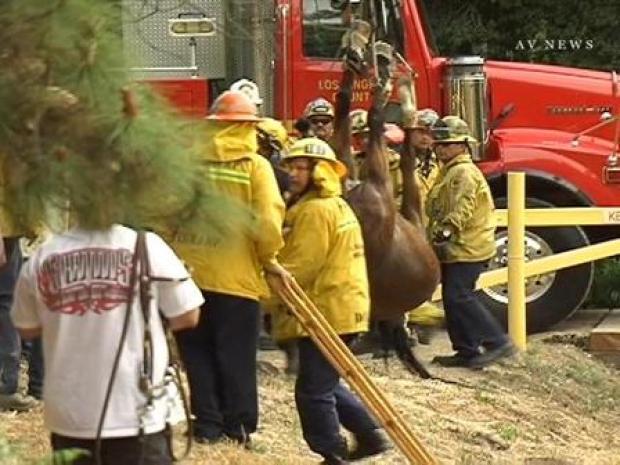 [LA] Horse Rescued in San Dimas