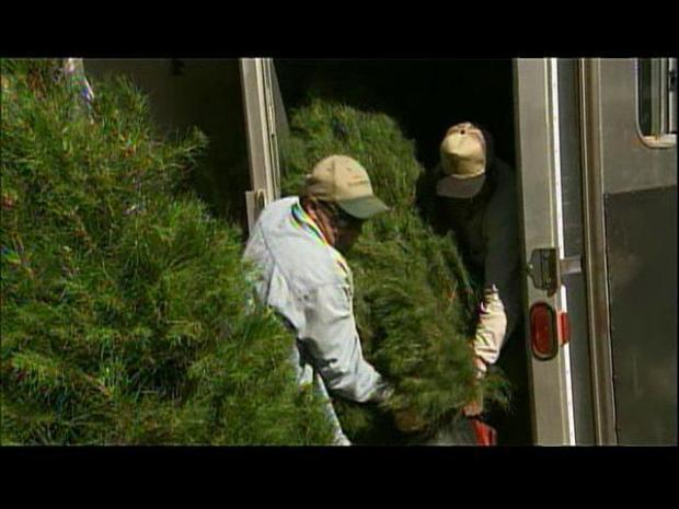 [DGO] Adopt-a-Tree Service Gives New Life to Christmas