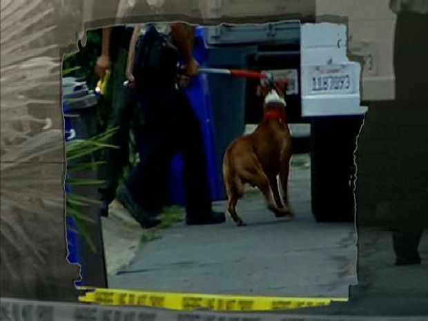 [DGO] Baby Mauled to Death by Pitbulls