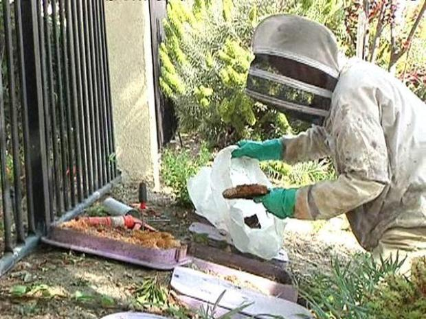 [DGO] Bee Keepers in Demand