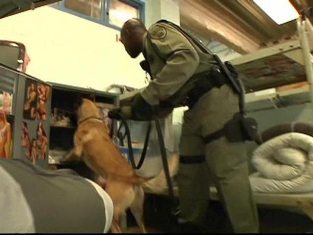 [DGO] Dogs Sniff Out Smart Phones