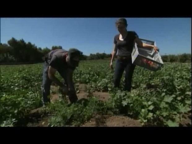 [DGO] Farm Fresh Produce Headed to Local Schools
