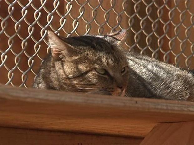 [DGO] Feral Cats Get a Home
