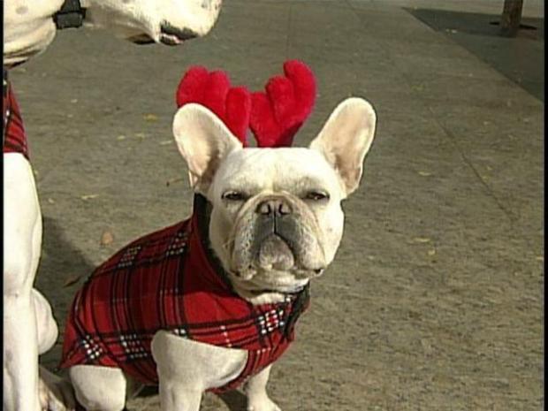 [DGO] Holiday Treats for Pups