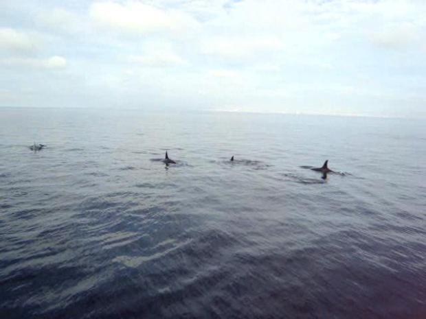 [DGO] Orca Sightings off San Diego