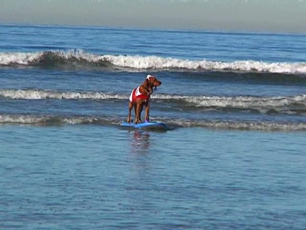 [DGO] Raw Video: Santa Paws Hits the Beach