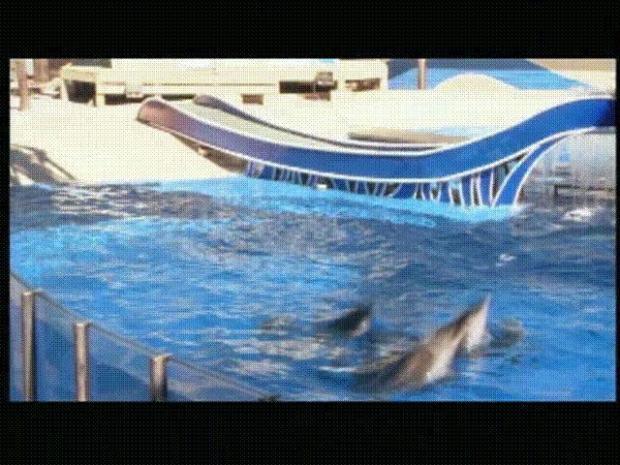 [DGO] Raw Video: SeaWorld's Blue Horizons Show