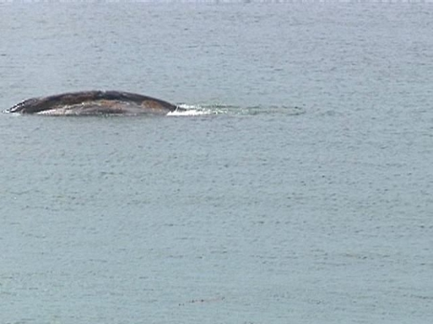 [DGO] Raw Video: Whales in Bay