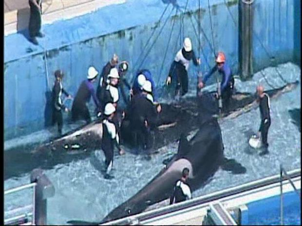 [DGO] SeaWorld San Diego is in mourning.