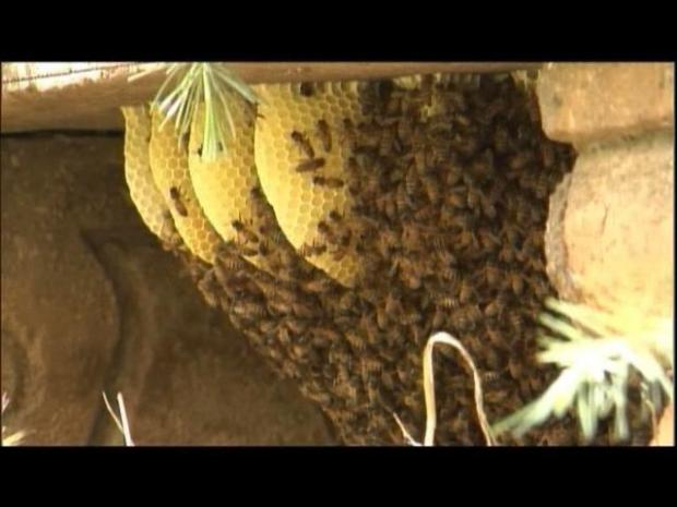 [DGO] Third Bee Swarm Incident This week