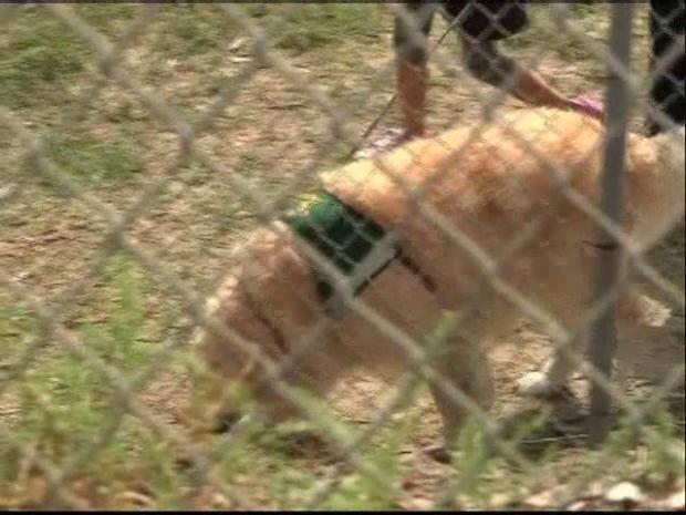[DGO] Trauma Dogs Help Kelly's Kids Return to Normal