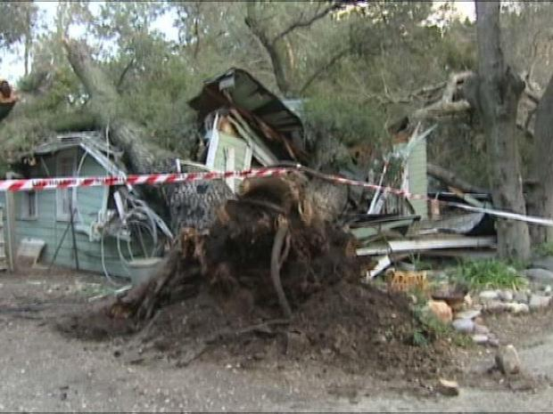 [DGO] Tree Crushed Ramona Home