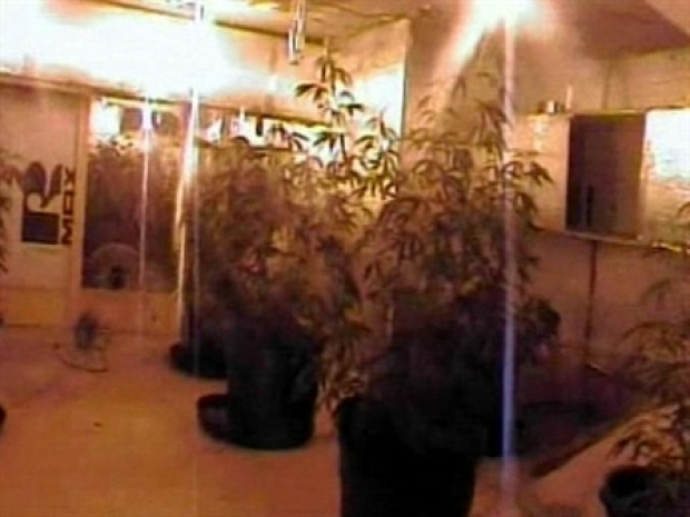 [NEWSC] Pot Farm Stuns Police