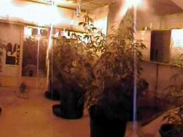 [NEWSC] Pot Farm Stuns Police