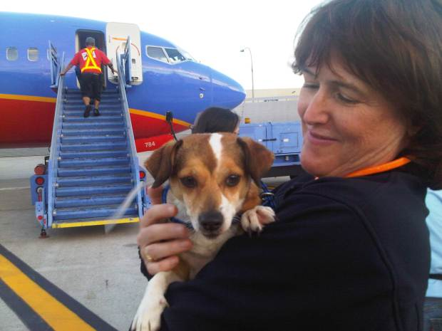 Displaced Sandy Pets Land in San Diego