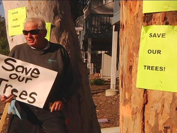 [DGO] Tree Cutting Plans Sparks Opposition
