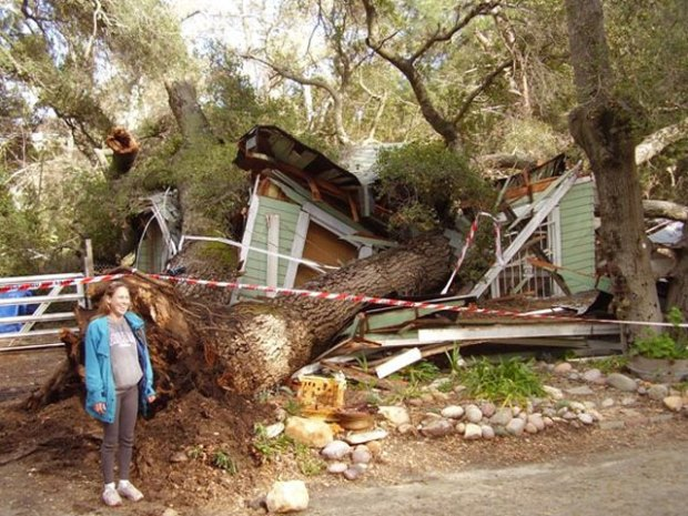 Images: Tree Crashed into Home