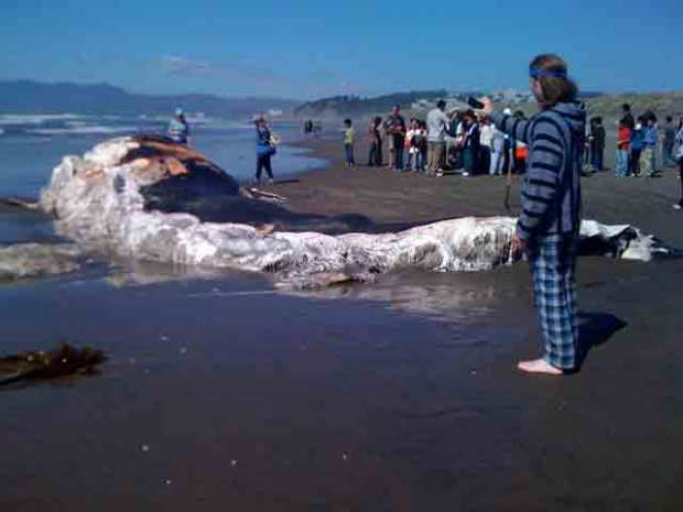 Photos: Whale Washes Up on Ocean Beach