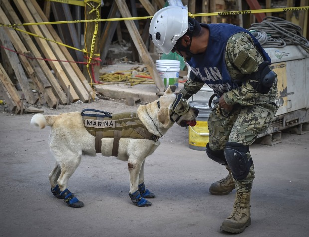 [NATL] Mexican Navy Honors Frida the Rescue Dog With Retirement Ceremony