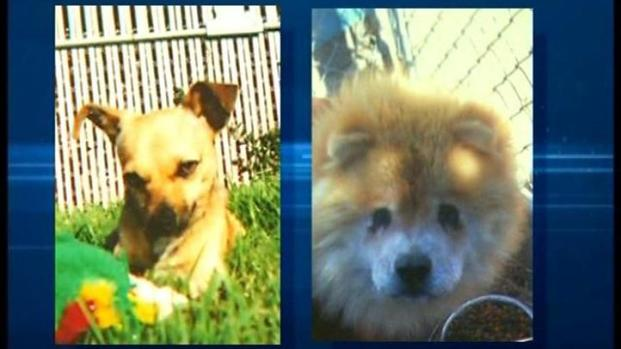 [DGO] Dog's Owner Describes Fatal Bee Attack
