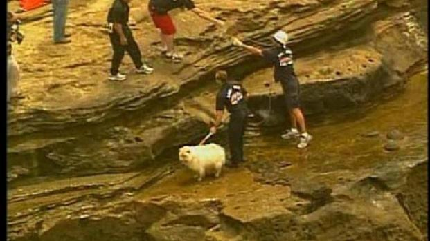 [DGO] Dog Rescued from Cliff: Raw Video